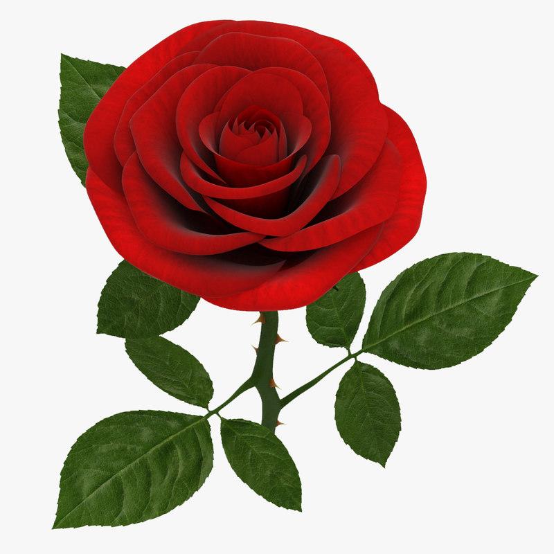 Rose Branch Red