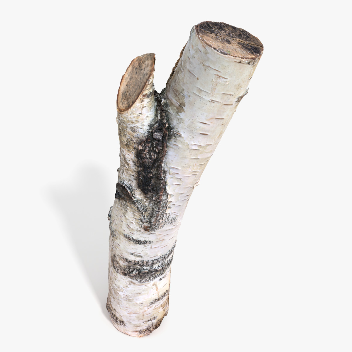 Log_birch_signature.png