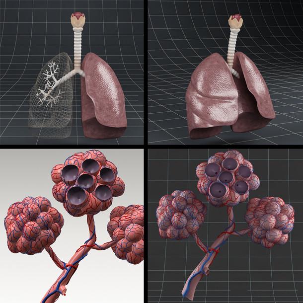 Anatomy_pack_01