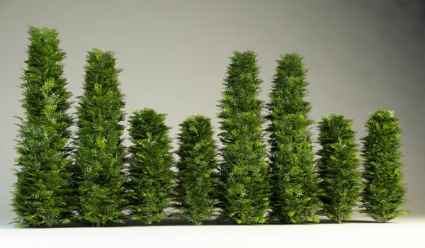 thuja hedge bush 3D Models