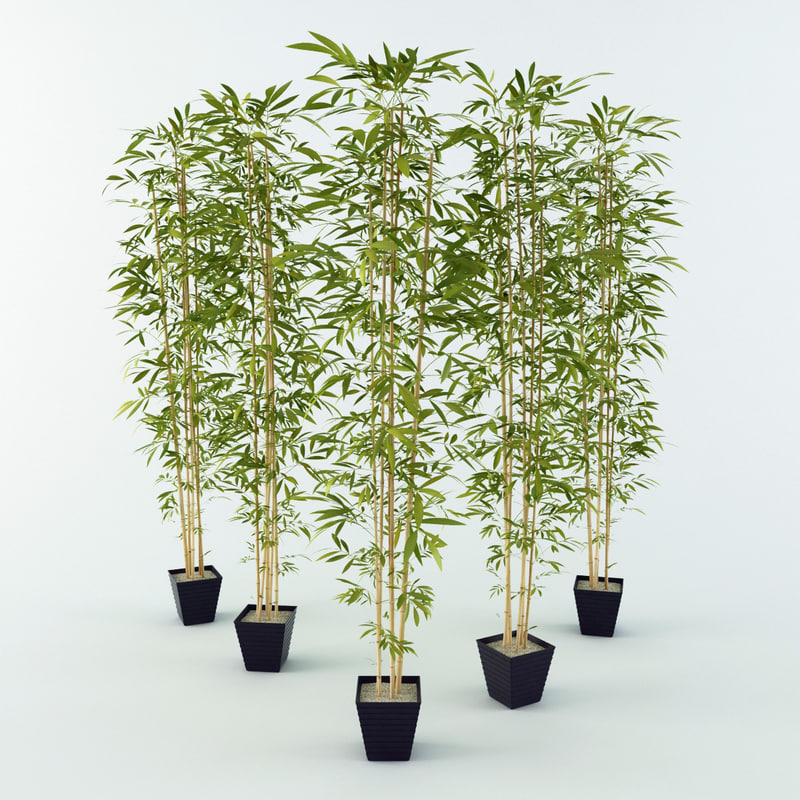 bamboo_001.jpg