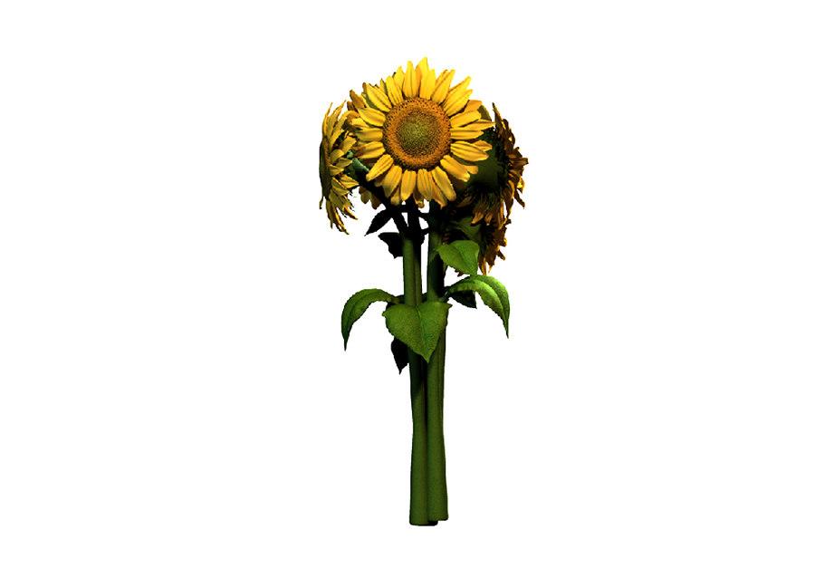 sunflower(1)