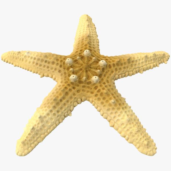 Sea Star 2 3D Models