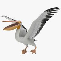 pelican 3D models