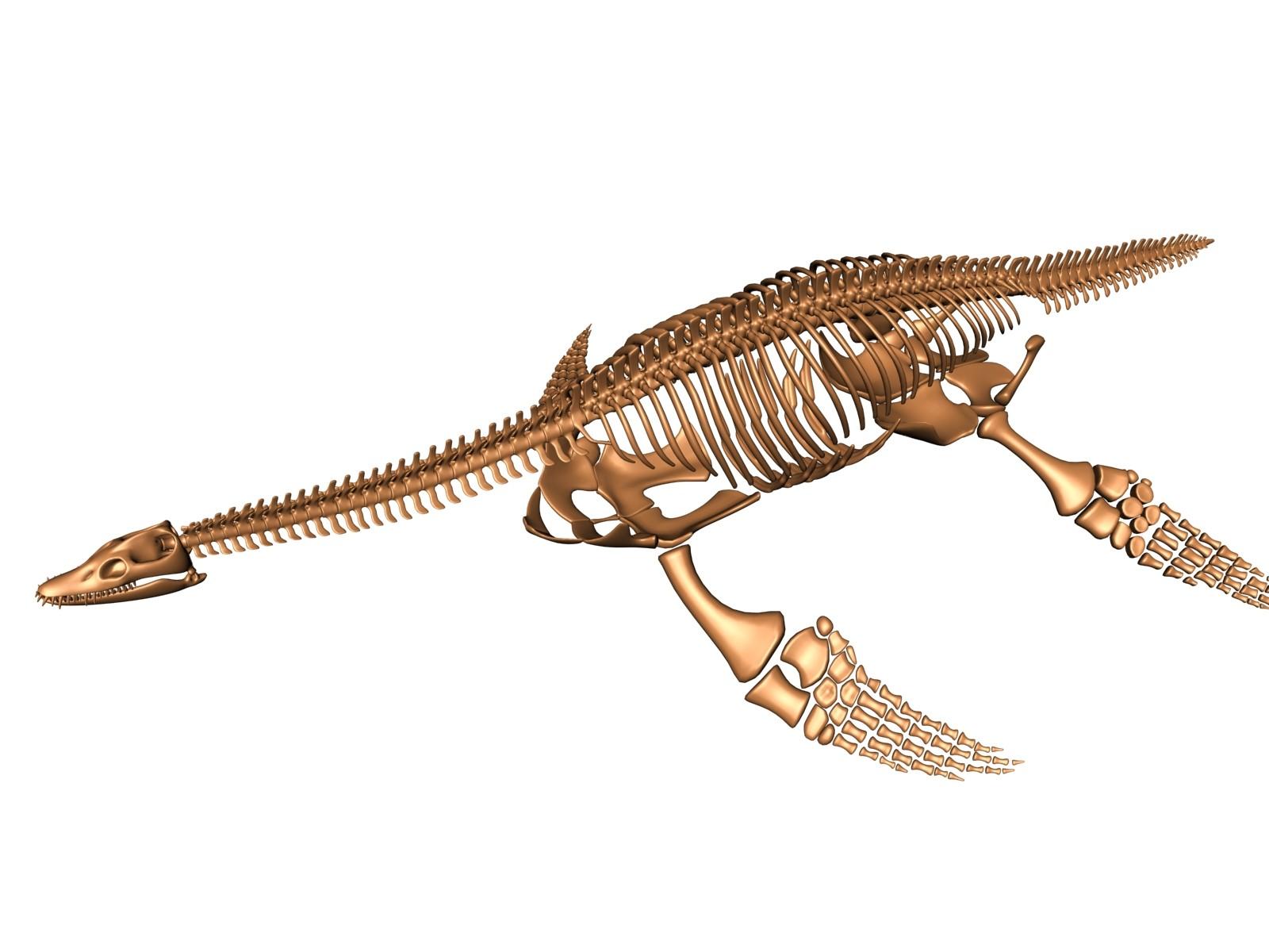 3d plesiosaur skeleton bones
