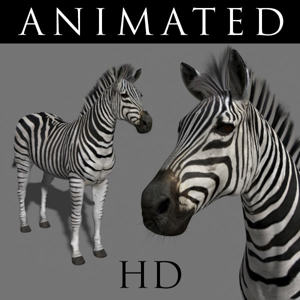 Photoreal HD Zebra 3D Models
