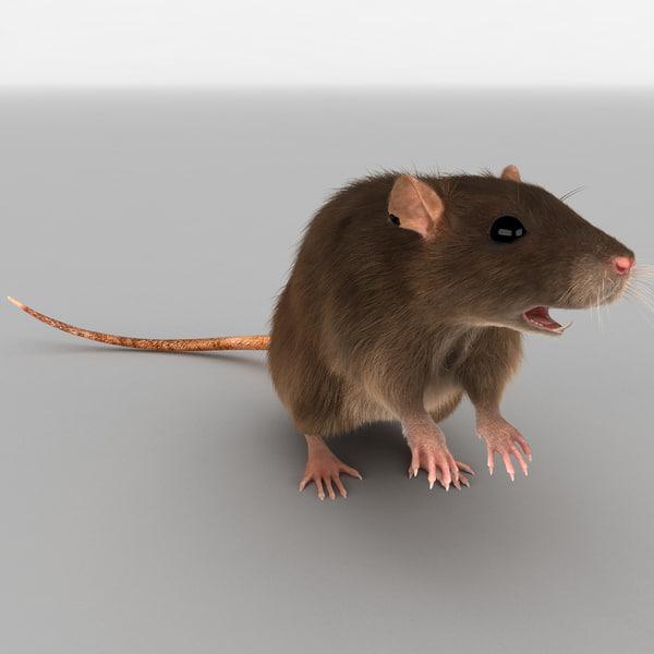 Rat Pose 2 Fur 3D Models