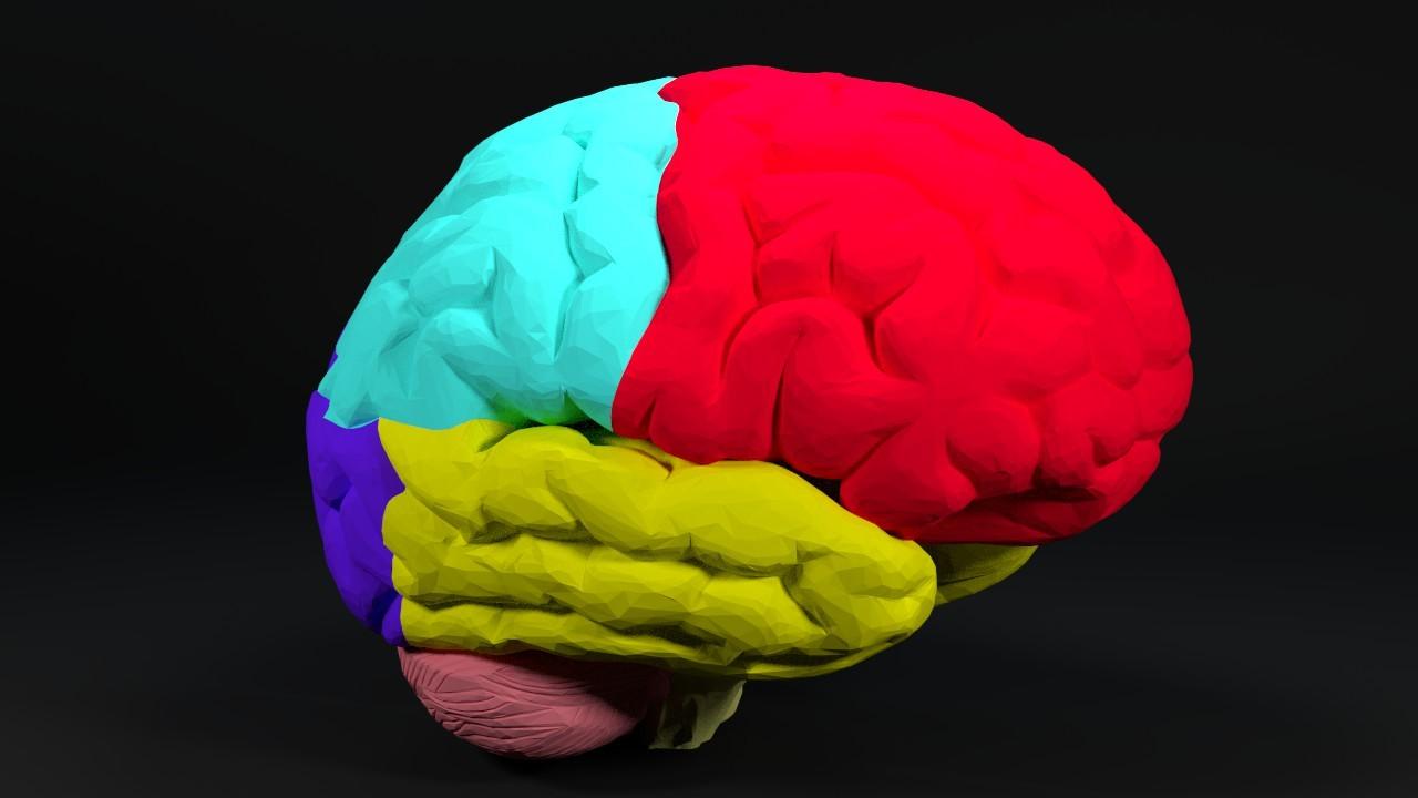 HumanBrain-Screen-0.jpg