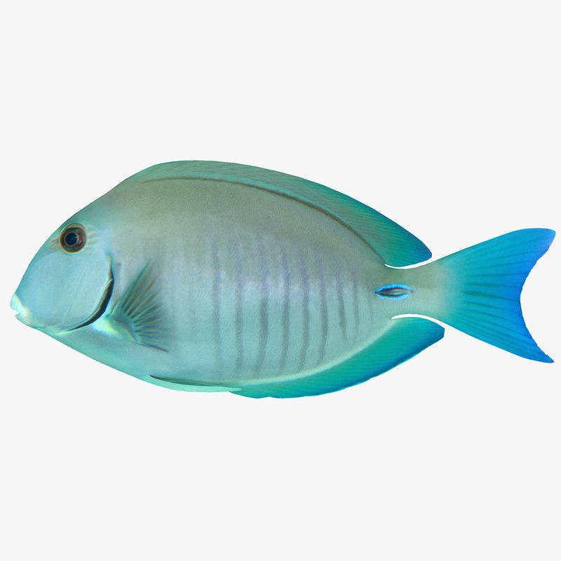 Doctorfish - photo#4