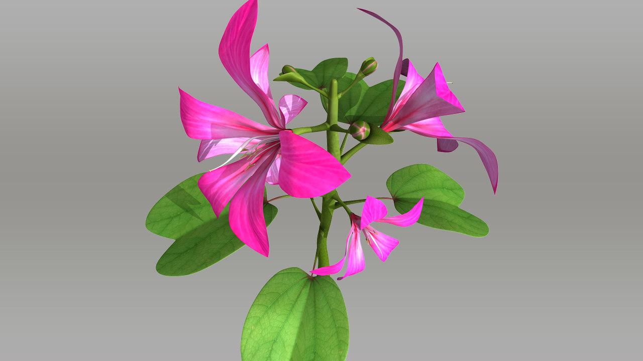 Caesalpiniacea