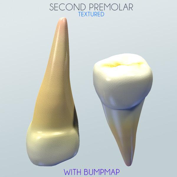 Human Second Premolar