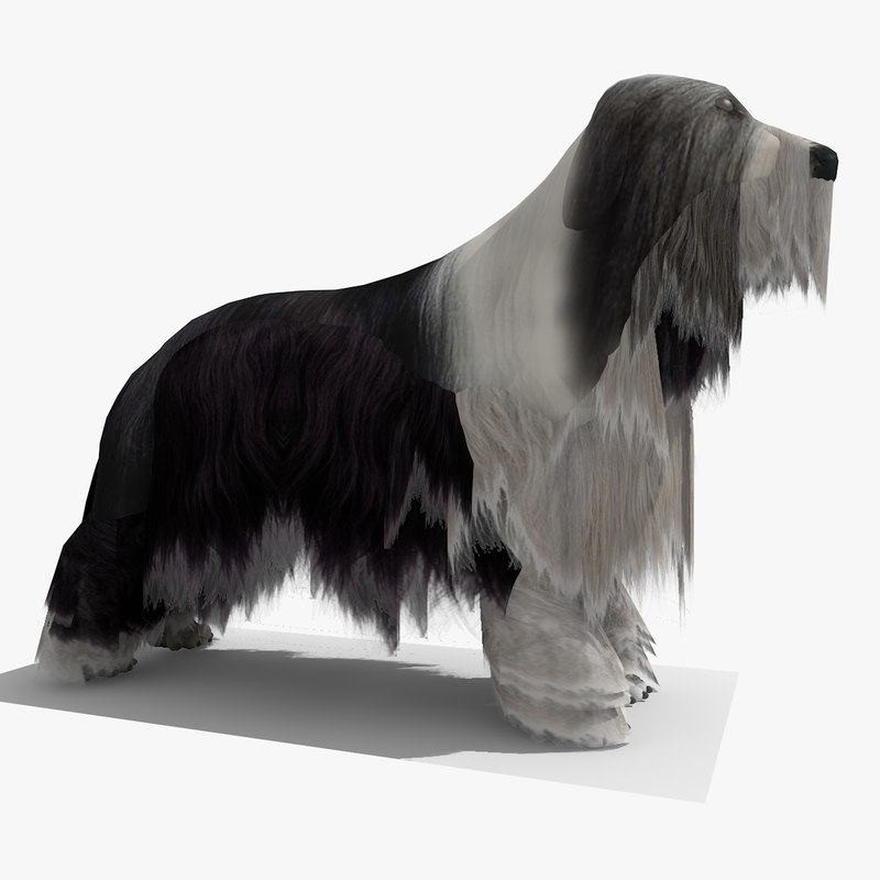 BEARDED COLLIE DOG 1.jpg