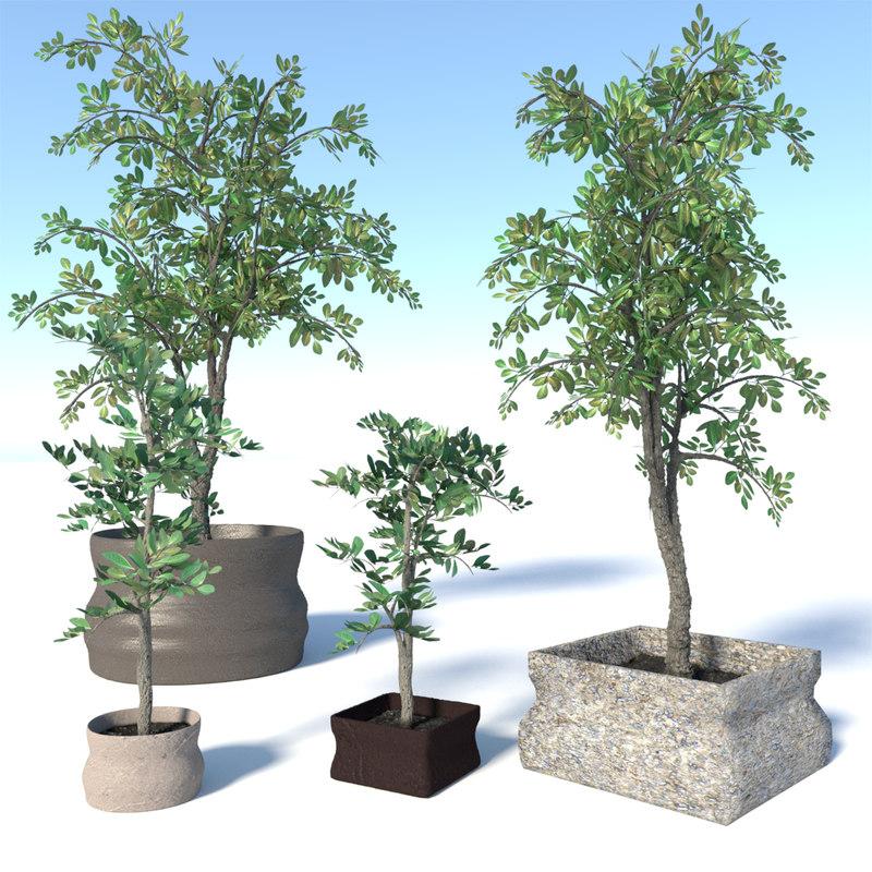 Potted Ficus Benjamina Tree Set