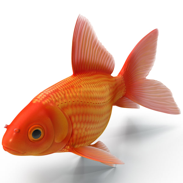 Goldfish 3 3D Models