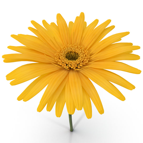 Yellow Daisy 3D Models