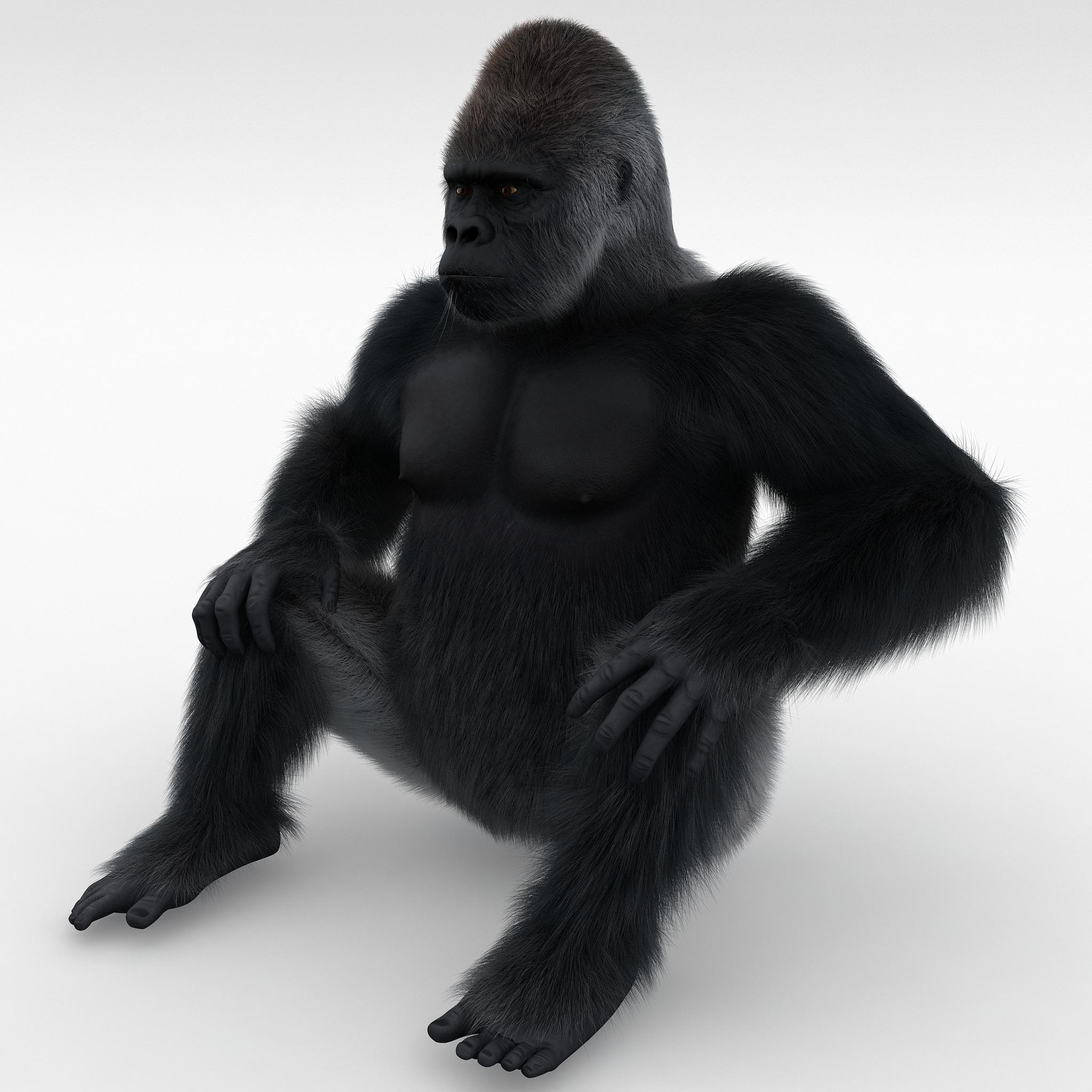 Gorilla Pose 3 Fur