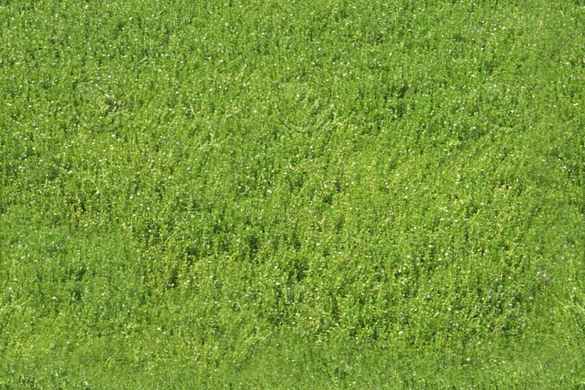 rplants0006.jpg
