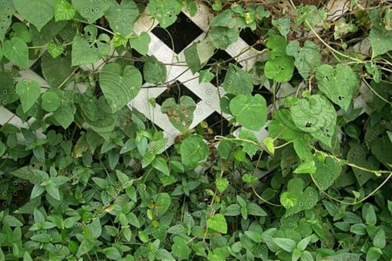 rplants0020.jpg