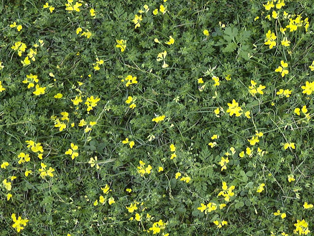 Grass002.jpg