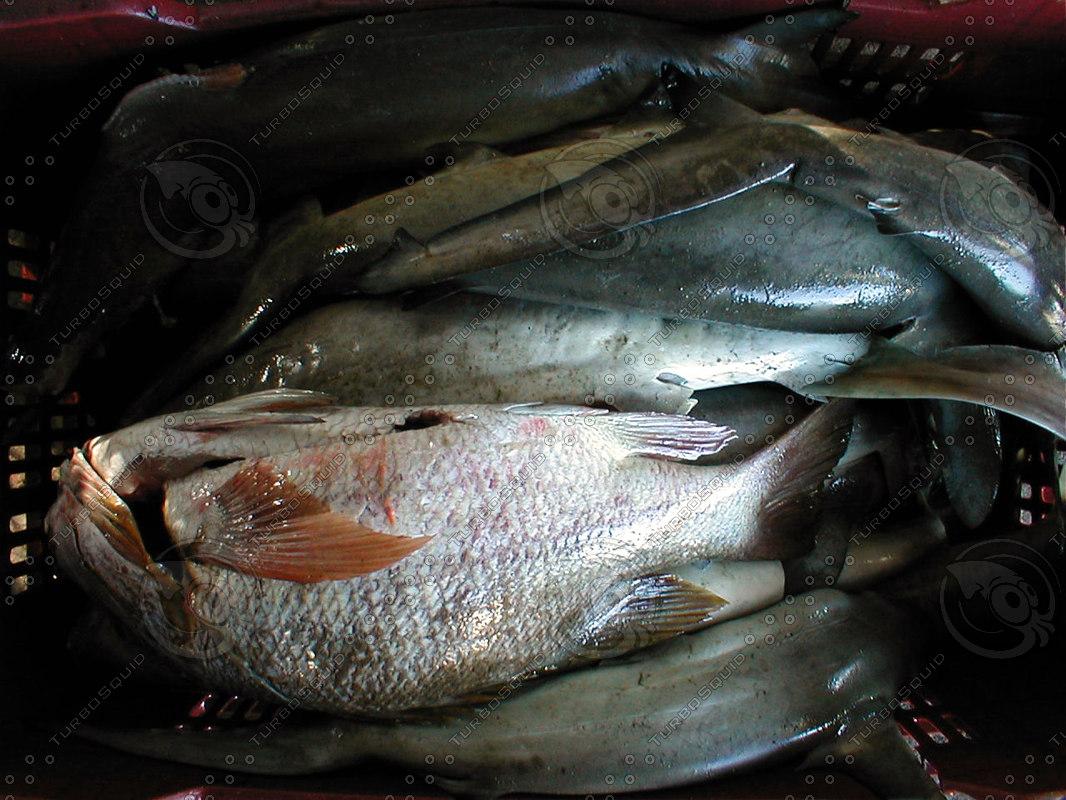 fishbasket2.jpg
