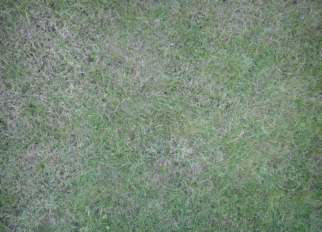 18-Grass1.jpg