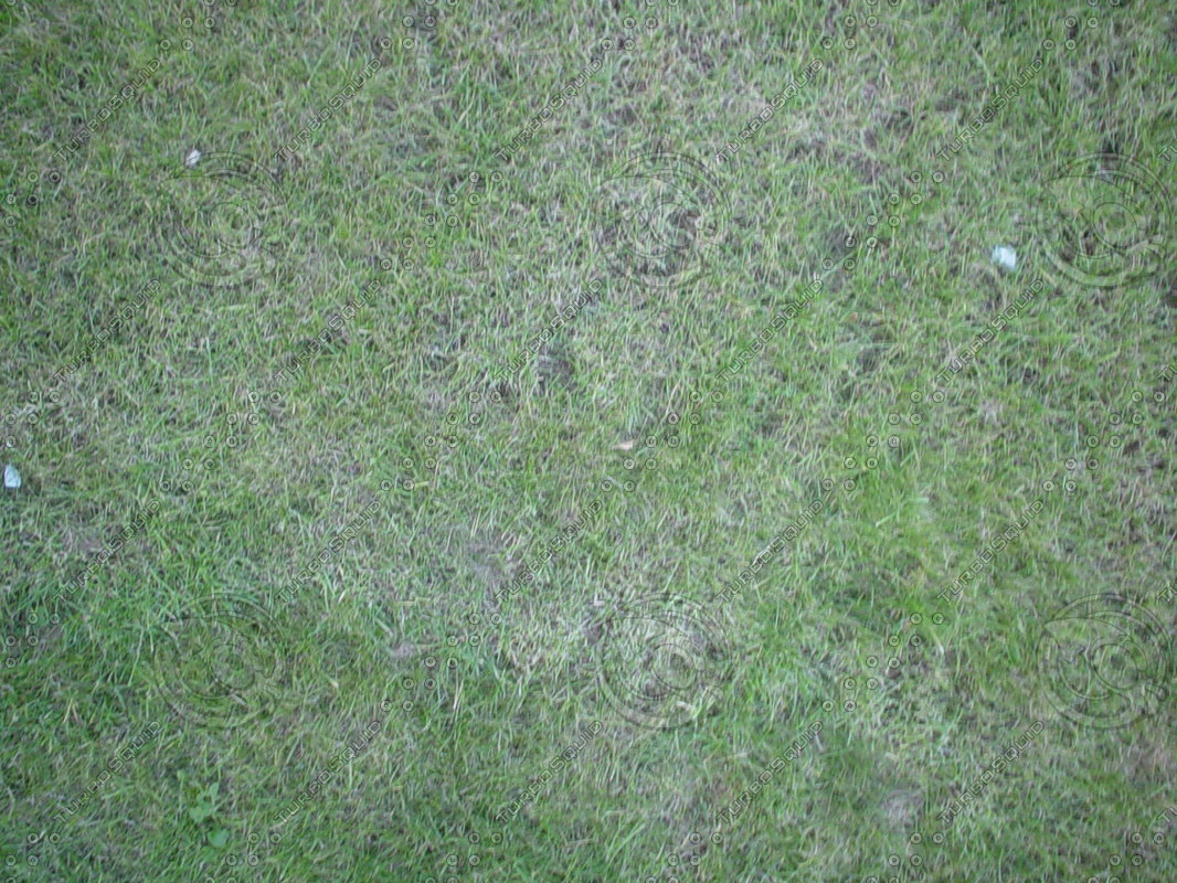 19-Grass2.jpg