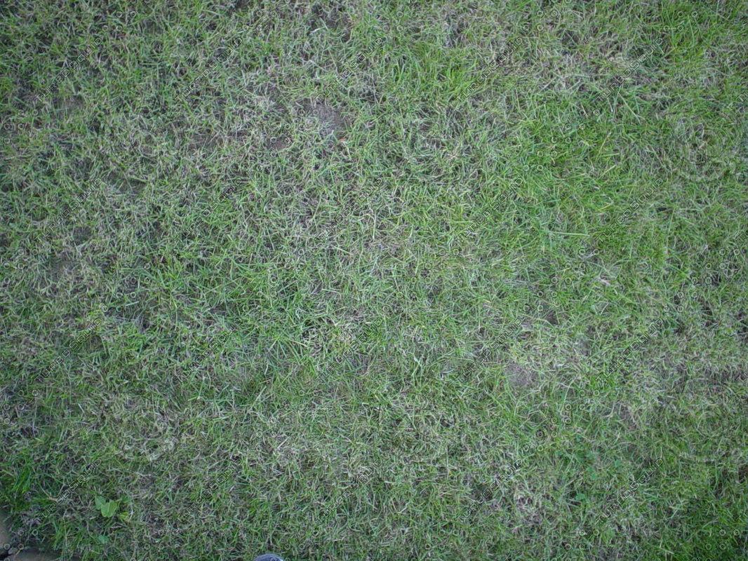 20-Grass3.jpg