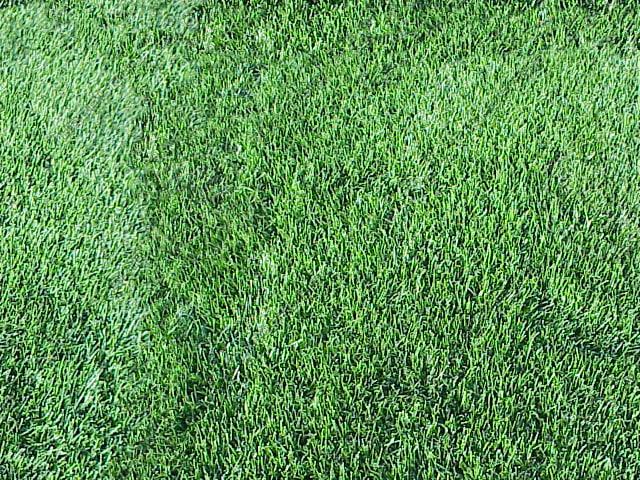 grass_00.JPG