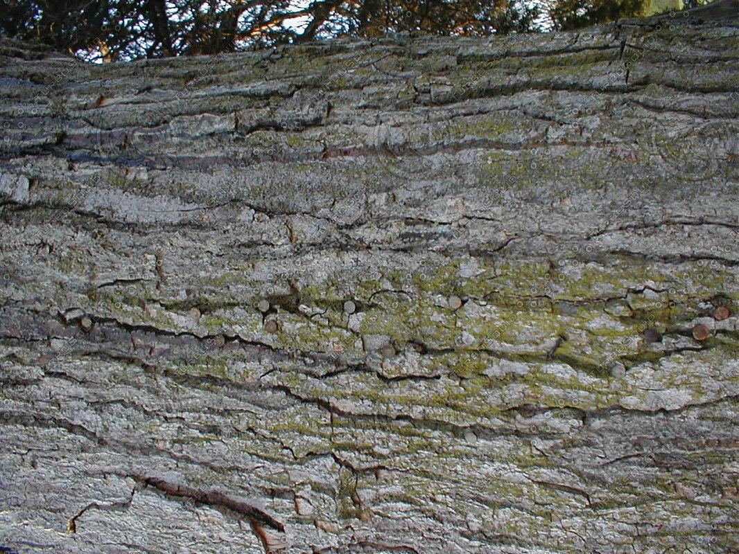wood0257.jpg