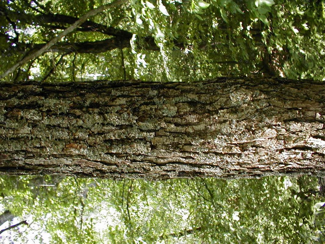 wood0862.jpg