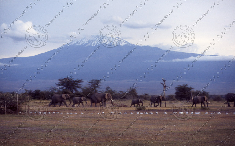 Mt Kilimanjaro.jpg