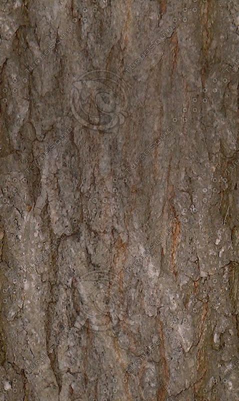 Pine_bark.jpg