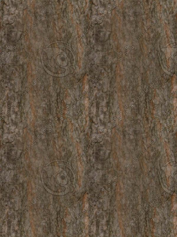 Pine_bark02.jpg