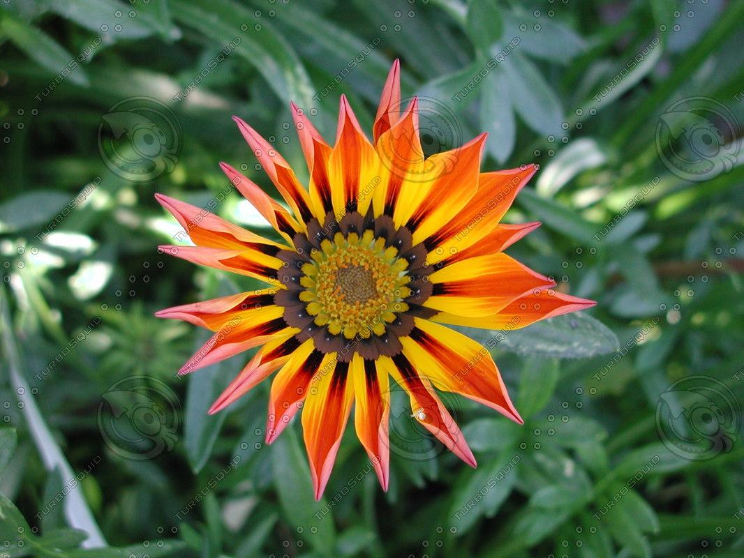 flower_03.JPG