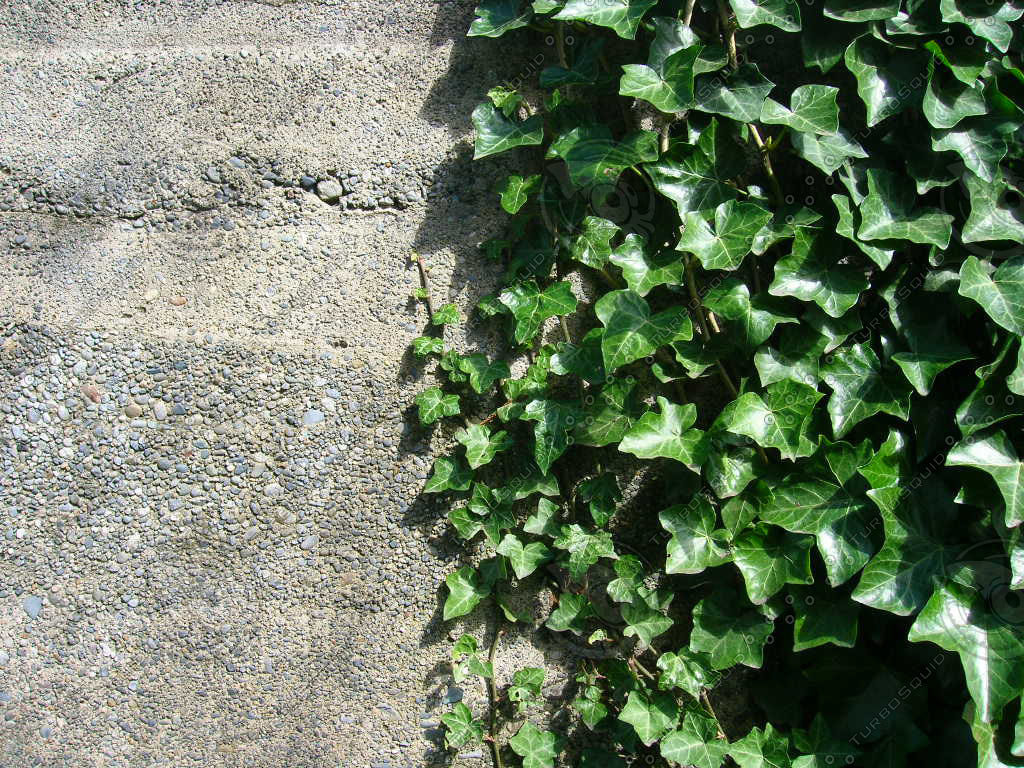 Concrete to Ivy.jpg