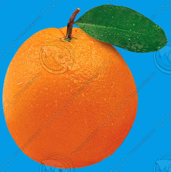 Orange_Fruit_thumb.jpg
