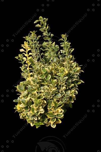 a3ds_shv1_shrub6_400.jpg