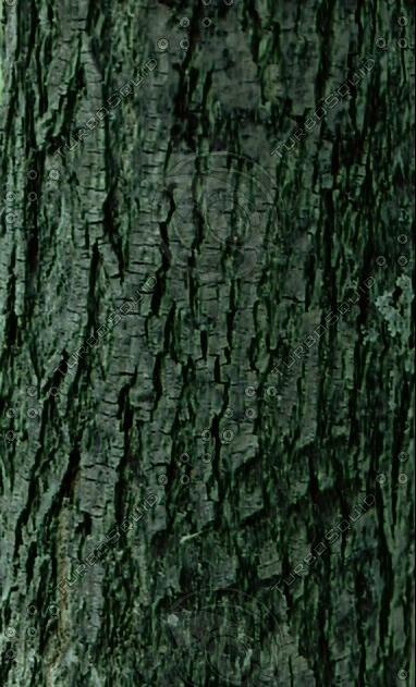 bark_2.jpg
