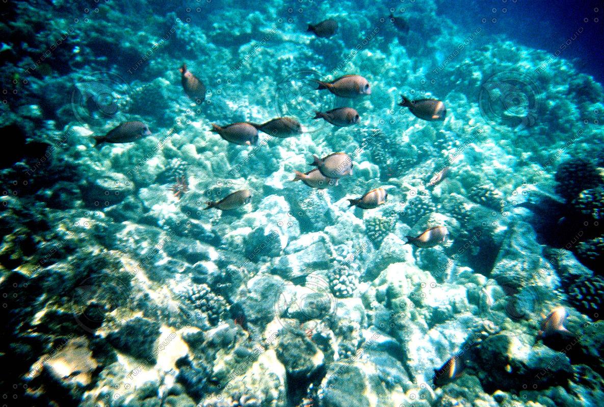 UNDERSEA_FISH_SCHOOL.jpg