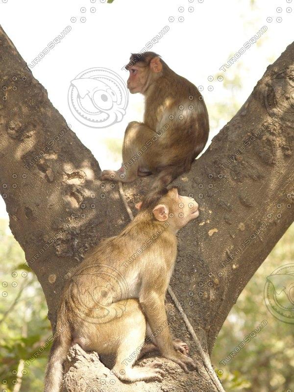 Monkey_5.jpg