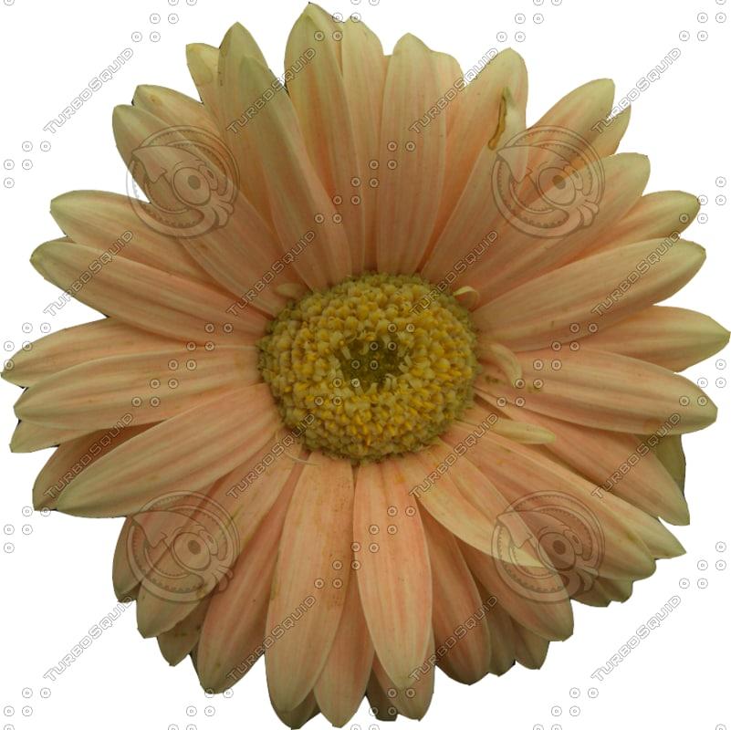 FlowerAlpha4.png