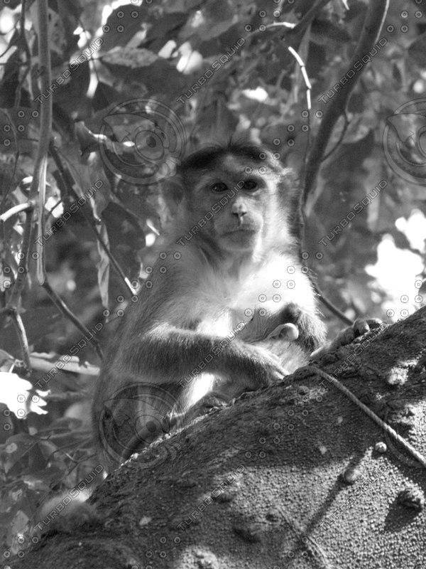Monkey_13.jpg