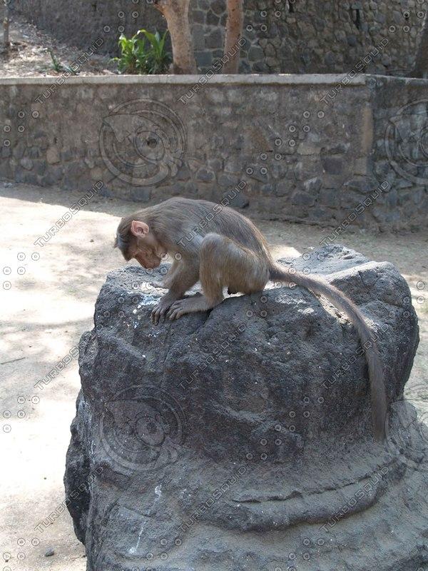 Monkey_14.jpg