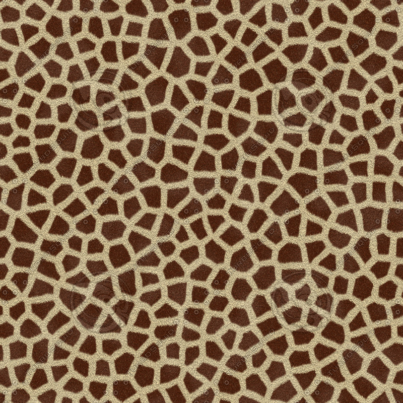 Giraffe Medium Spot.jpg
