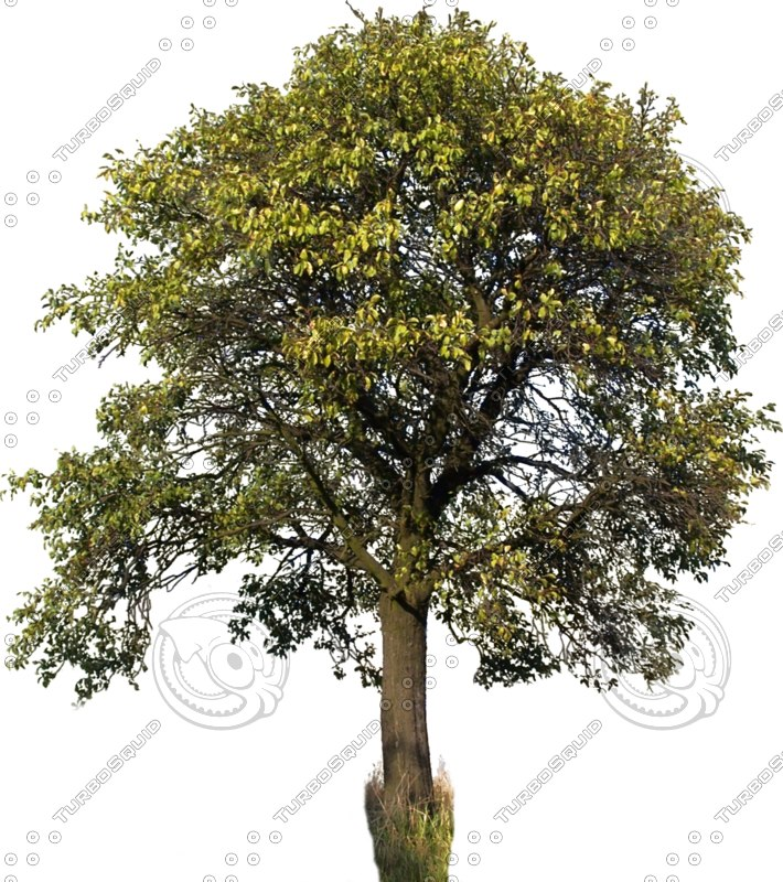 tree46.png