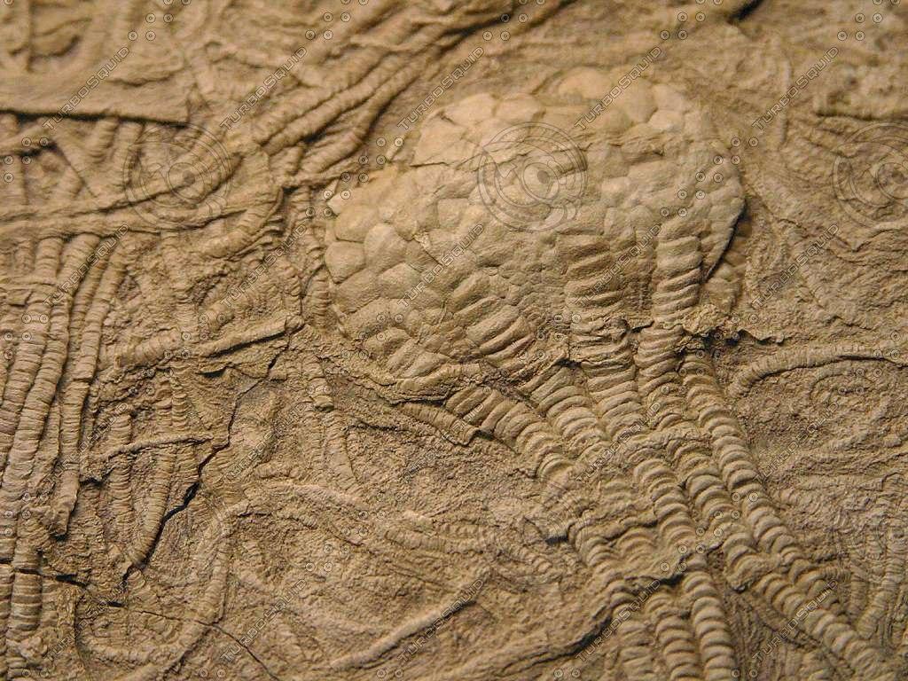 museum_4_bg_081603.jpg