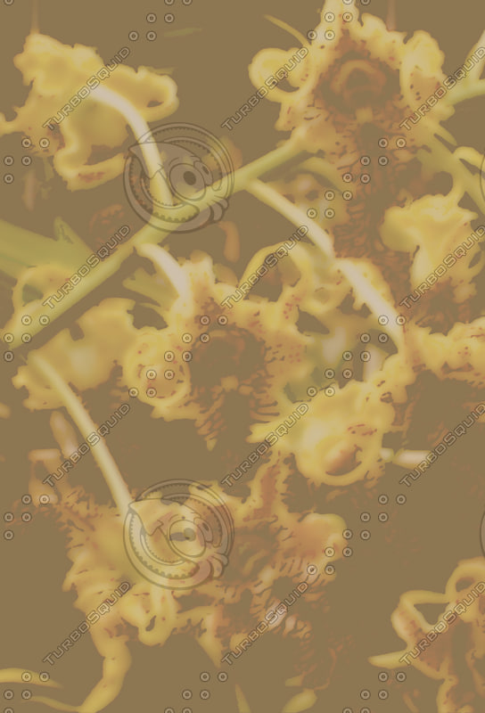 Bradyzign - orchid background 07 sub.jpg