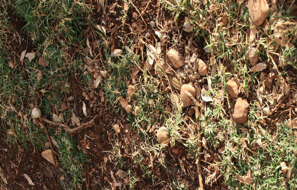 ground&soil034.jpg