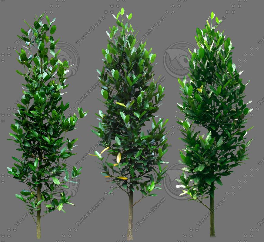 Texture jpg plant alpha vegetation