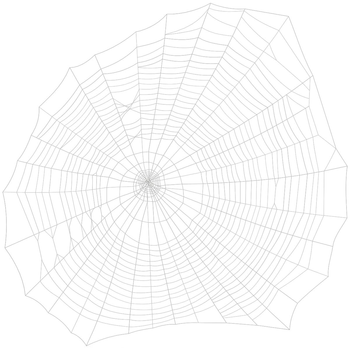 Spider_Web_002.jpg